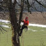 elagage-abattage-accais-arbre