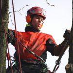 elagage-demontage-chene-arbre