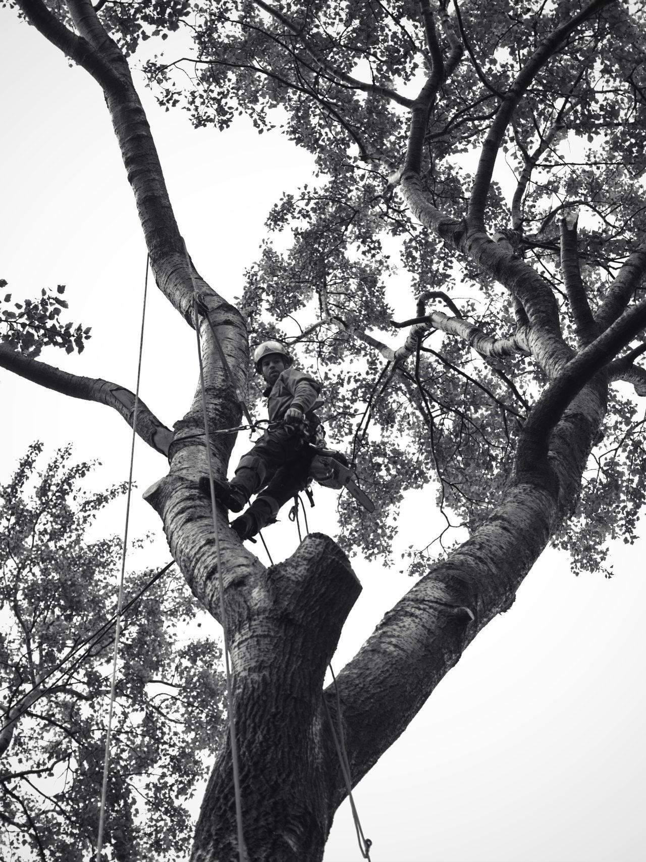 Démontage de vos arbres
