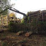 évacuation des bois