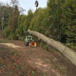 travaux forestier